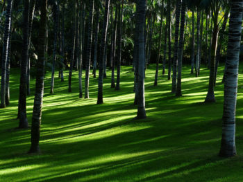 How to grow a lawn in a shaded area